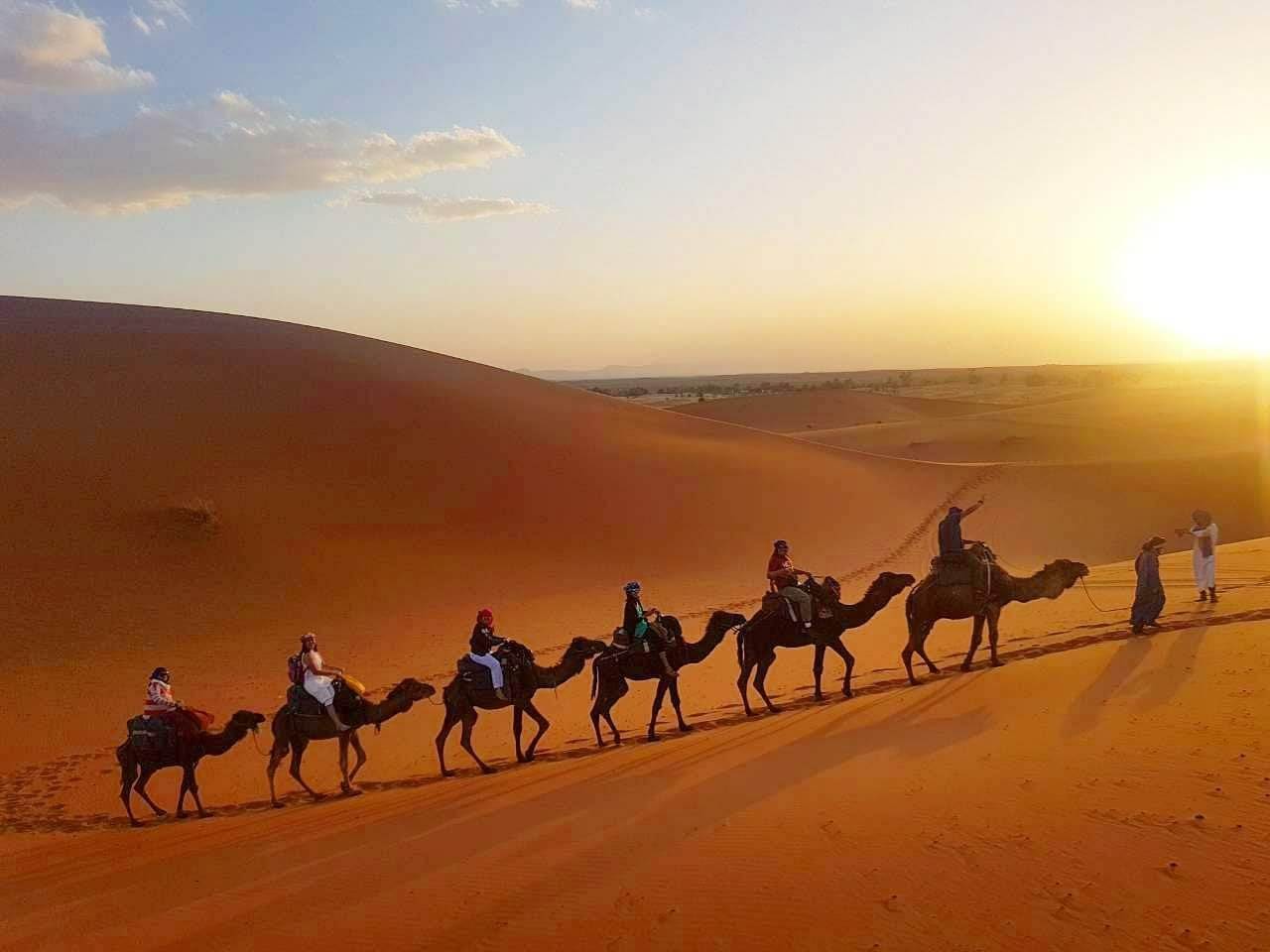 Take a ride by a Camel and see the other beauty part of our Hotel
